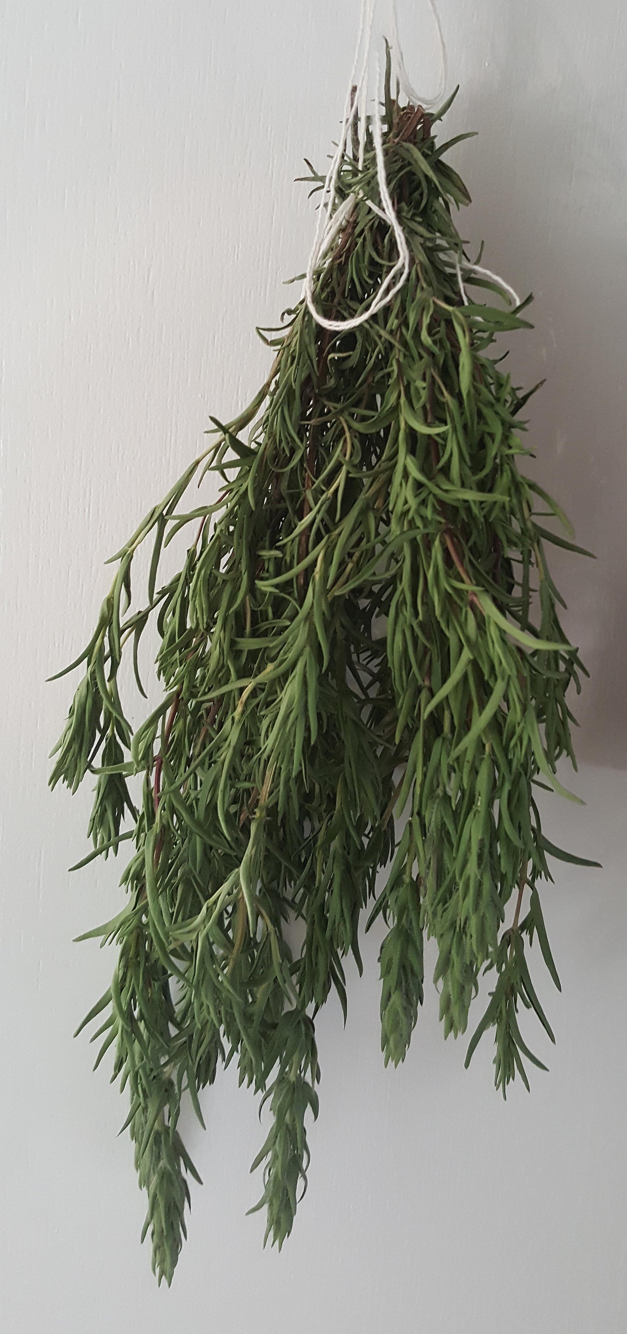 zaatar-drying